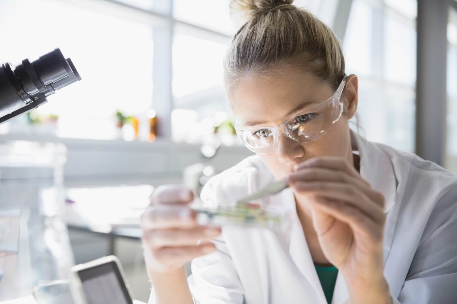 woman analyzing sample from petri dish
